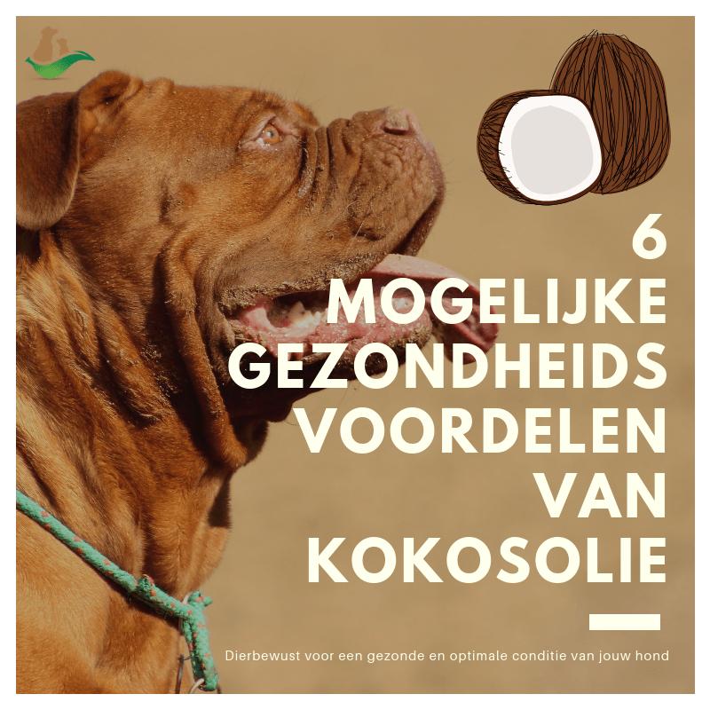 gezondheidsvoordelen kokosolie voor honden