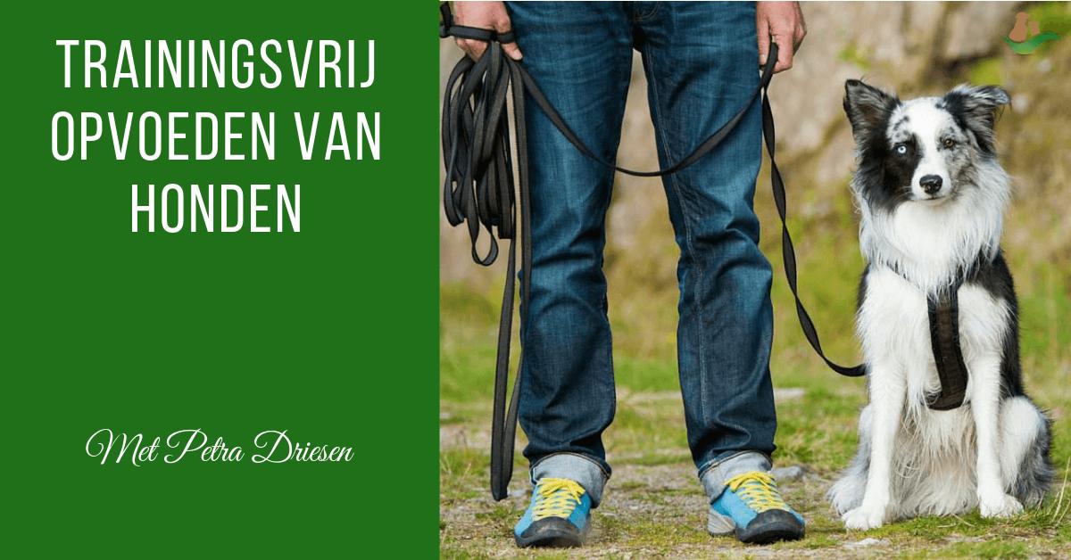Trainingsvrij opvoeden van honden met Petra Driesen