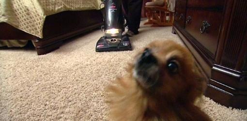 vlooien bestrijden bij honden en in je huis