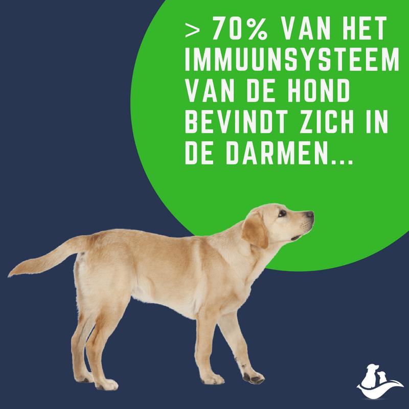 70% van het immuunsysteem zit in de darmen hond