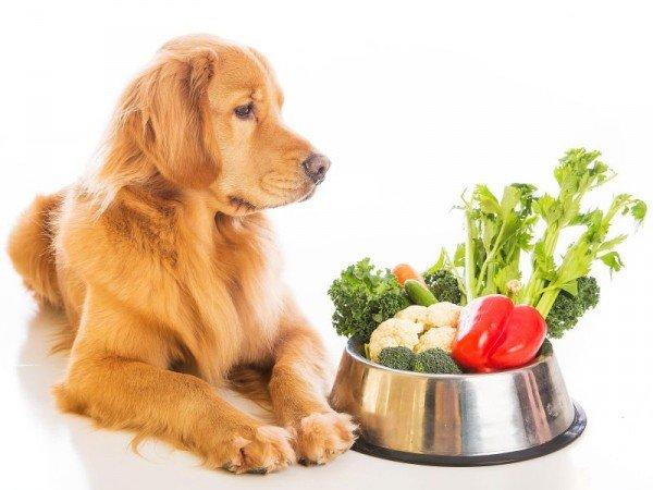 hond-en-groente